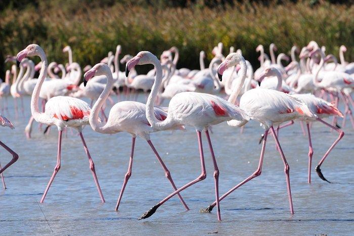 itinerario sardegna molentargius alla scoperta dei bellissimi fenicotteri rosa