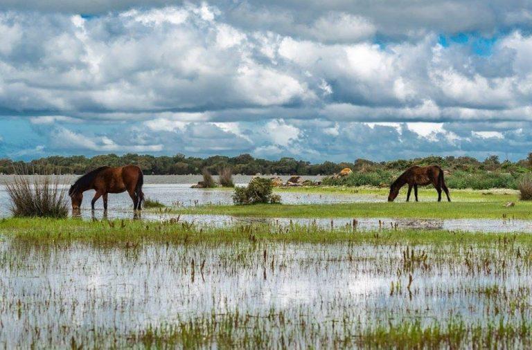 Itinerario Sardegna Parco Giara una bellezza spaventosa quella dei cavallini